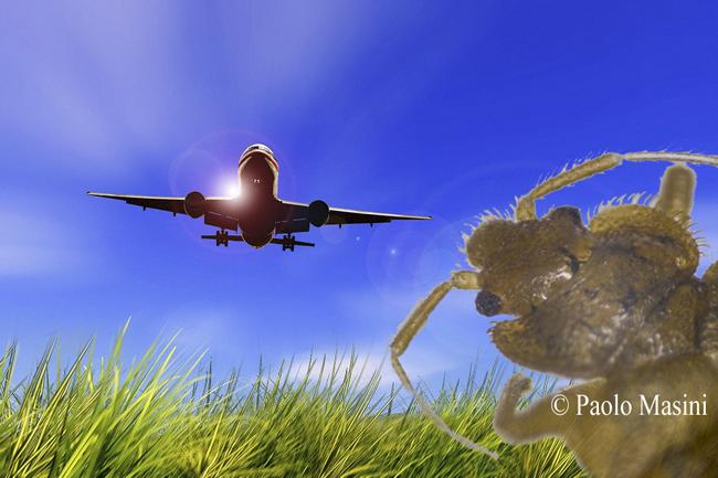 Allarme Cimici dei letti negli Aerei. Uomo assalito durante il volo!