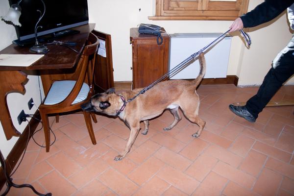 Le cimici dei letti invadono la scuola elementare: il Preside chiama i Cani Anti Cimici per riuscire ad eliminarle tutte
